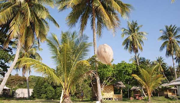 Упал кокос
